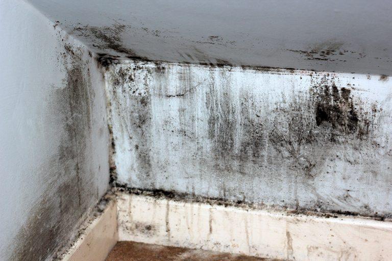 sealing shower
